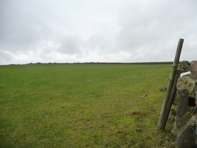 Large pasture field