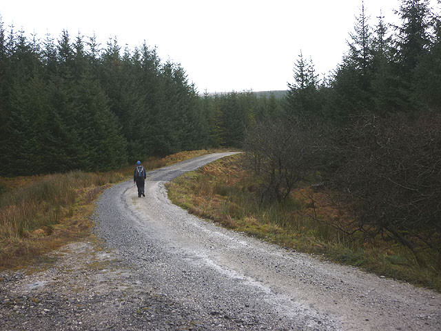 Forestry track on Old Ing Moor