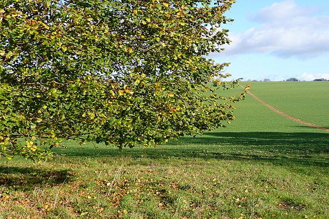 Near English Wood