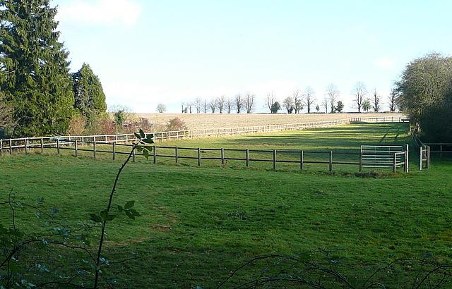 Paddock near Hay Wood