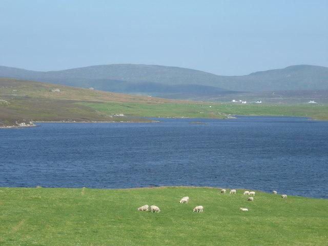Clousta: sheep graze by Loch of Vaara