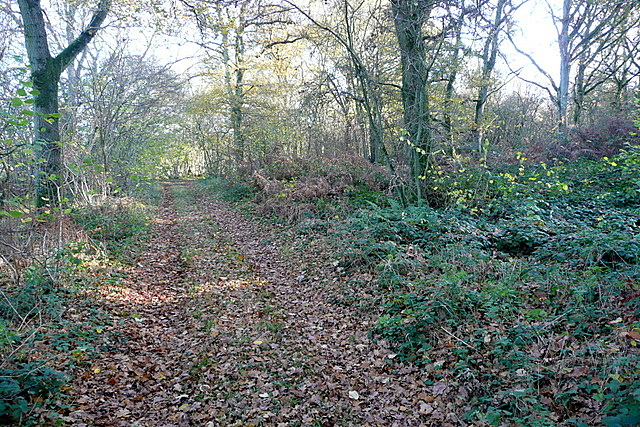 Footpath in Frith Wood