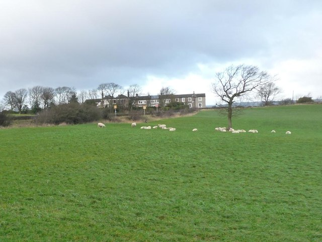 Sheep grazing on a windy day