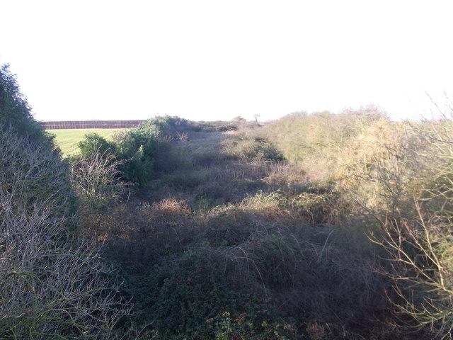 Former railway line, much overgrown