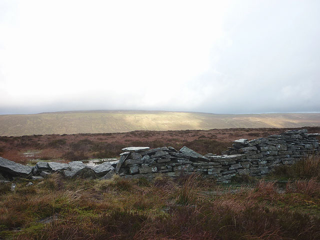 Ruined dry stone wall, Low Green Field Lings