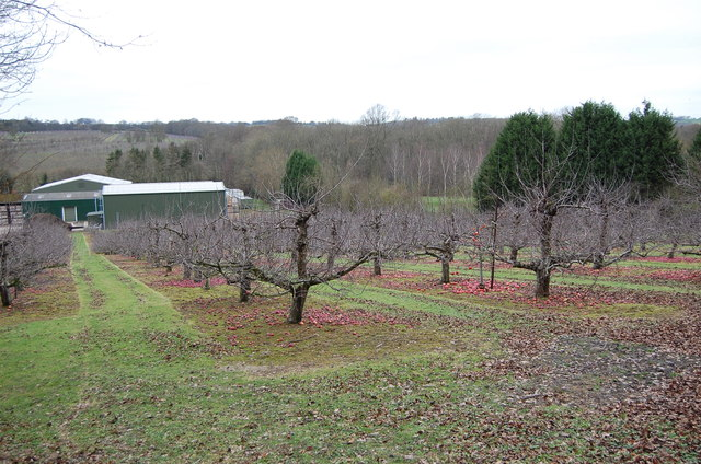 Apple Orchard at Hayle Farm