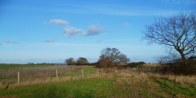 Fields west of Fishbourne Channel