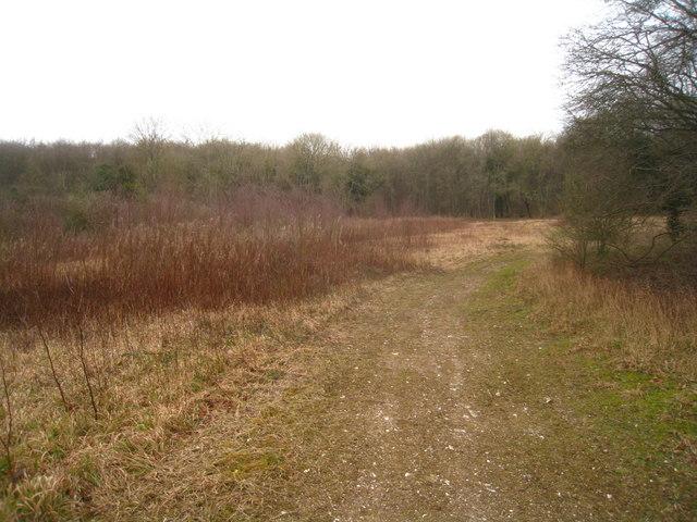 Open ground near Blackwood Cottage