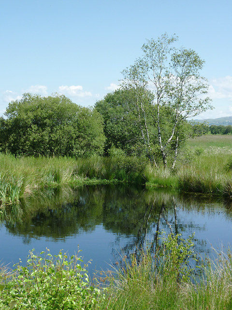 Pool and trees on Cors Caron in July, Ceredigion