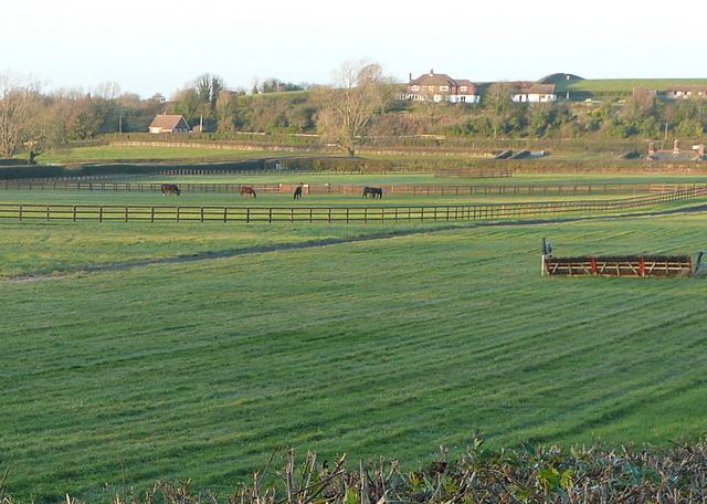 Park House Stables's gallops
