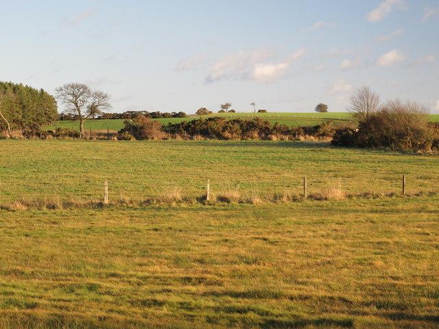 Farmland northeast of the Lead Road (3)