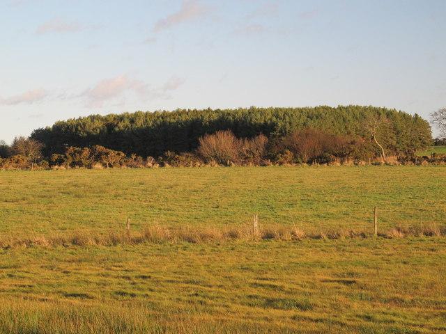 Farmland and plantation northeast of the Lead Road