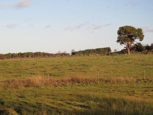 Farmland south of East Riggend Plantation