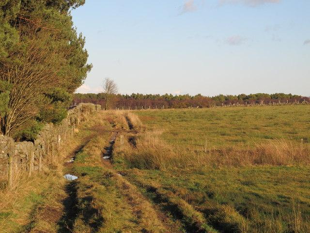 East Riggend Plantation