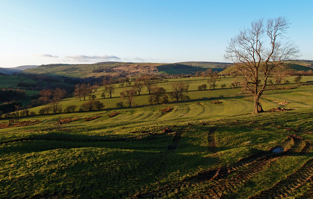 Fields near Downholme