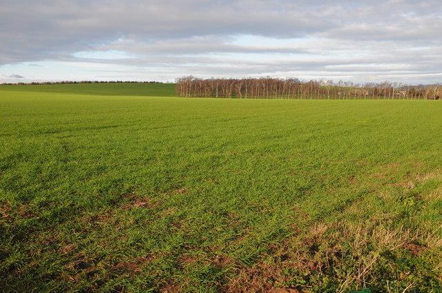 Arable land near Peterstow