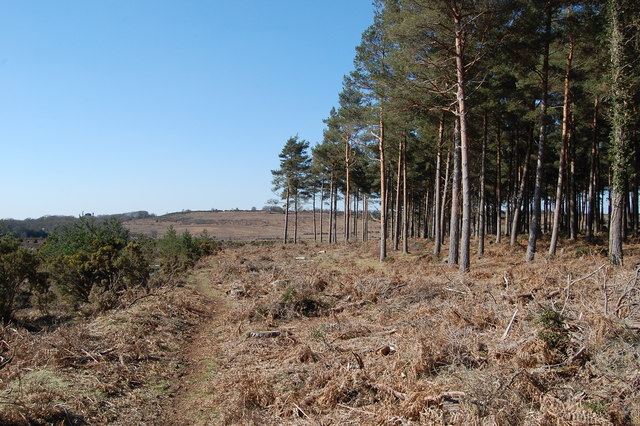 Pitts Wood Inclosure