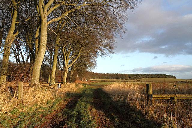 Farmland by a strip plantation near Greenlaw
