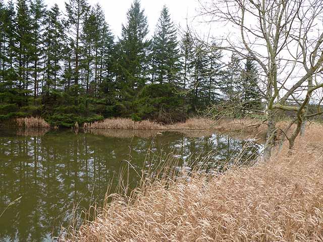 Pond below Cushat Hill