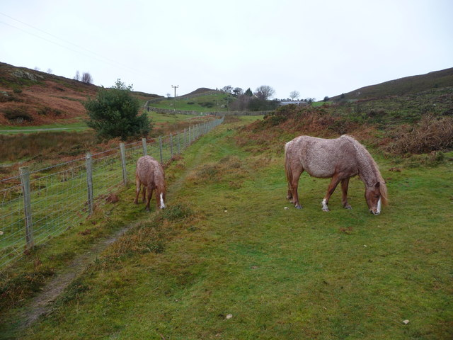Ponies on Conwy Mountain