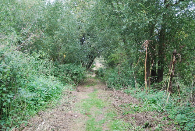 Medway Valley walk in the woods