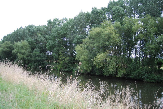 Trees lining the River Medway