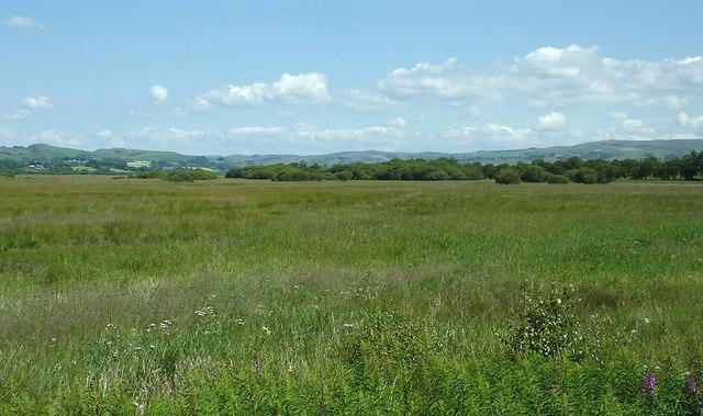 Cors Caron - The Bog of Tregaron in July, Ceredigion