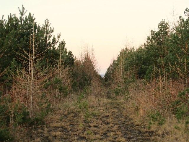 Footpath into Kellas Plantation east of Kellas Bridge
