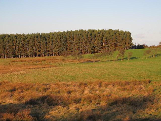 Farmland and plantation east of Healey Riggend