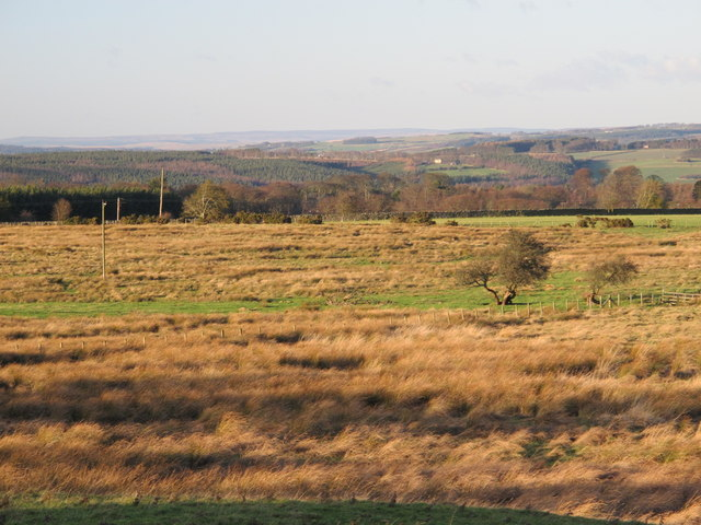 Farmland east of Healey Riggend (2)