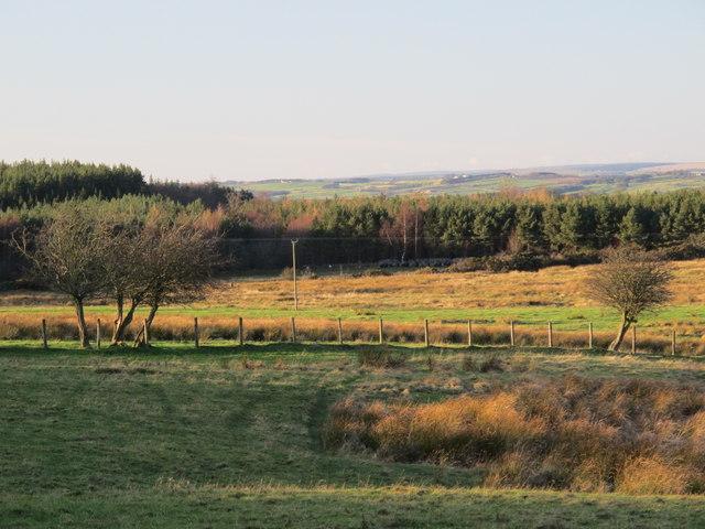 Farmland east of Healey Riggend (4)