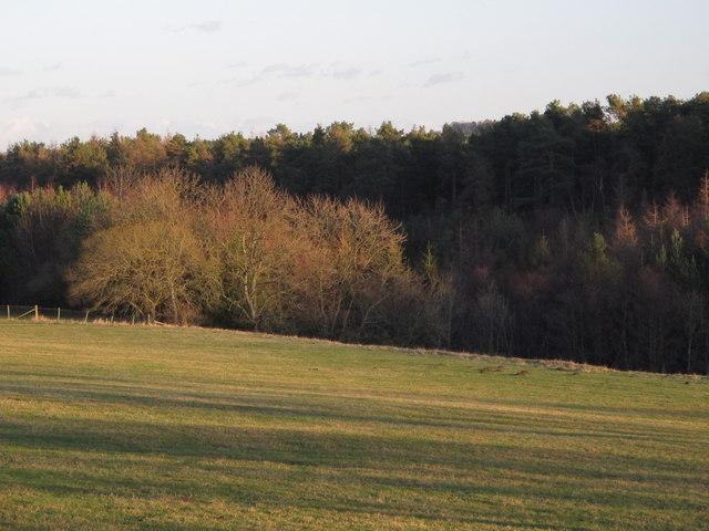 Long Wood near Scales Cross