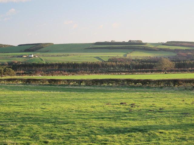 Farmland north of Long Wood