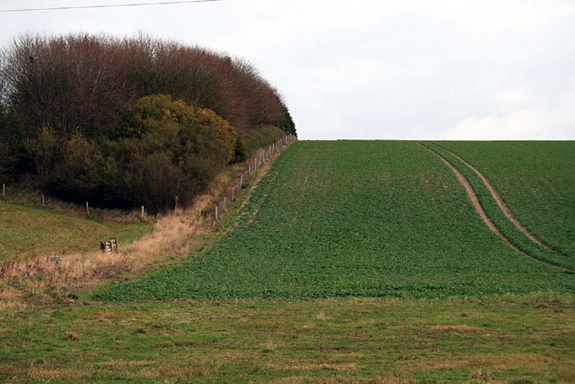 Plantation and field