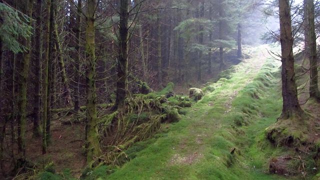 Path, Lettermay Forest