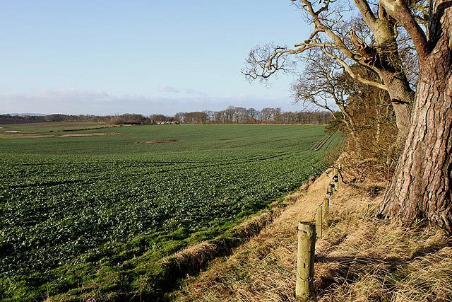 Winter crops at Lurdenlaw