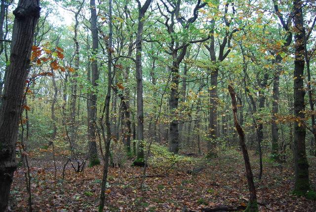Clowes Wood