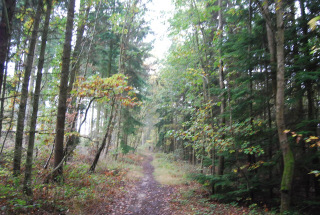 Footpath in Clowes Wood