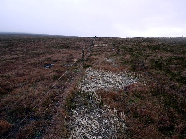 Fence junction west of Cold Fell