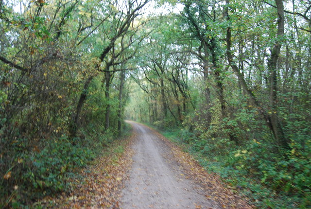 National Cycle Route 1, Clowes Wood