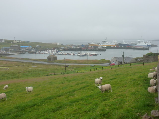 Symbister: sheep above the harbour
