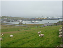 HU5462 : Symbister: sheep above the harbour by Chris Downer