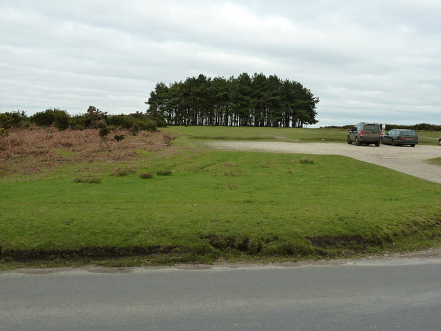 Friend's Clump on Ashdown forest