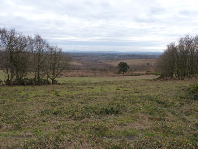 View south across Ashdown Forest