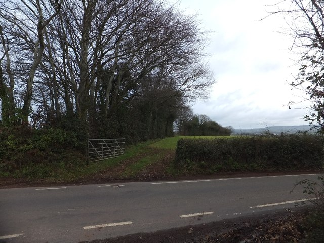 Hedge and field gate at the crest of Little Toms