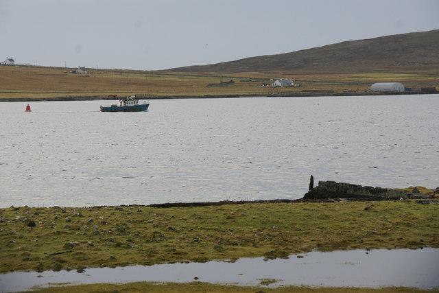 Boat coming into Baltasound pier