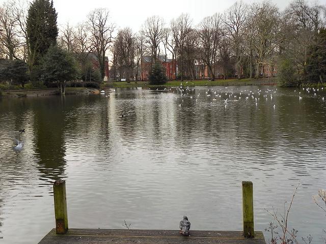 Alexandra Park Lake