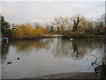 TQ1667 : River Thames, Thames Ditton by Hugh Venables