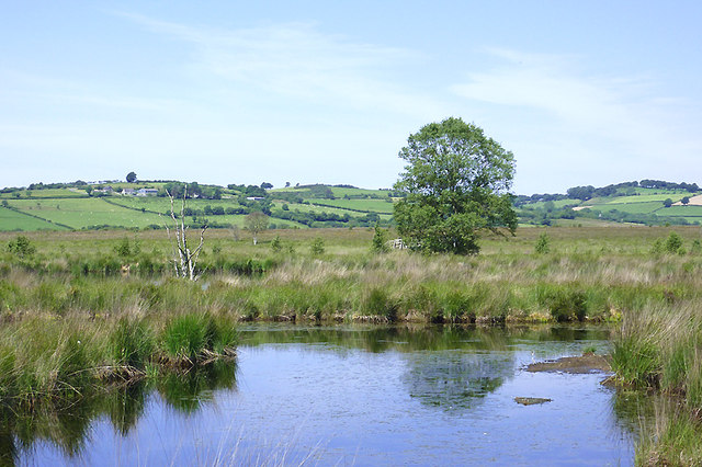Cors Caron in July, Ceredigion