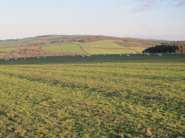 Pastures west of Penn's Hill